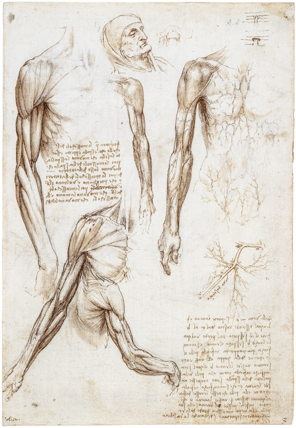 Leonardo da Vinci, studia anatomiczne, ok. 1510-11 r. / DOMENA PUBLICZNA / HER MAJESTY QUEEN ELIZABETH II; THE ROYAL COLLECTION